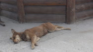 Tired homeless dog inspiring compassion sleeping and waking up happy when called Stock Footage