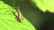 Stock Video Footage of Assassin bug beetle Shield bugs macro 4k