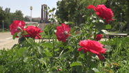 Beautiful park, red roses shot, background huge mausoleum, modern construction Stock Footage