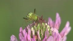 Beetle sits in flower background meadow 4k Stock Footage