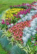 Autumn flowerbed composition Stock Photos