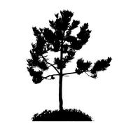 Tree Silhouette Isolated on White Backgorund. - stock illustration