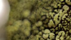 Map lichen on quartz, moving macro close up Stock Footage