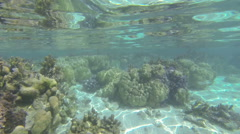 Coral reef in tahiti Stock Footage