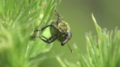 Weevil beetle macro forest 4k Stock Footage