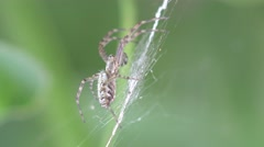 Spider insect sitting in web macro 4k Stock Footage