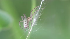 Spider web insect sitting macro 4k Stock Footage