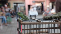 Dancing Chameleon - Marrakech souk Stock Footage