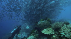 Scuba divers watching large shoal of trevally circling underwater Stock Footage