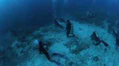 Scuba divers lined up behind rope on the lookout for thresher sharks Stock Footage