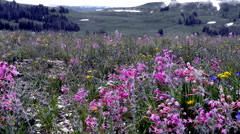 Wildflowers on Skyline Dr with thunder-N8-HD P-2561 Stock Footage