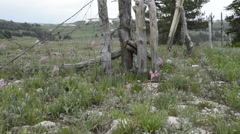 Mountain wild flowers and old fence-N8-HD P-2585 Stock Footage