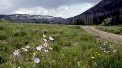Mountain wild flowers with dog-N8-HD P-2575 Stock Footage