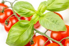 cherry tomatoes on the vine with basil - stock photo