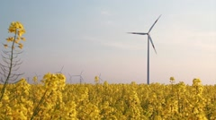 Rape Field with Wind Turbines - Regenerative Energy Stock Footage