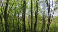 Beautiful wood. Slow flight. Aerial rear movement Footage