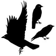 Birds Silhouette template set. plus EPS10 Stock Illustration