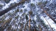 Forest and sunny day morning Stock Footage