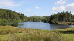 Tarn Hows Lake District National Park England uk Stock Footage