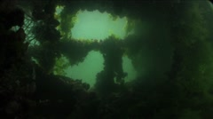 Algae and fish swim in the sunken fishing boat Stock Footage
