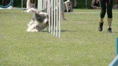 showcasing dogs agility on the obstacles  fs700 odyssey 7q - stock footage
