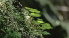 The mossy trunk with green grass  fs700 odyssey 7q Stock Footage
