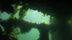 Marine underwater green algae Stock Footage