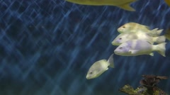 Fishes in tank Stock Footage