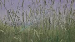 Leaves and grasses rack focused natural background Stock Footage
