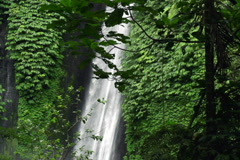 Beautiful waterfal in tropical forest in Bali, super slow motion, 240fps NTSC - stock footage