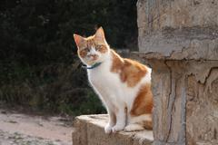 Ginger cat on wall Stock Photos