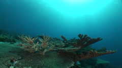 Sunshine and coral reef Stock Footage