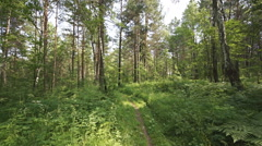 Siberian pine forest (02) pan up Stock Footage