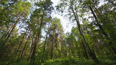 Siberian pine forest (03) static shot Stock Footage