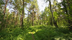 Siberian pine forest (04) static shot Stock Footage