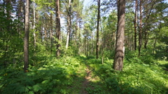 Siberian pine forest (05) pan up Stock Footage