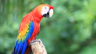 Stock Video Footage of Colorful Macaw Bird