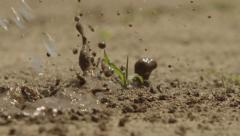 Slow Motion Water Droplets on Mud and Small Plant Stock Footage