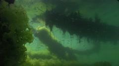 Underwater marine algae under the old fishing pier Stock Footage