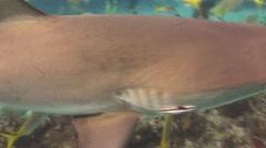 Show - feeding of sharks. Bahamas. - stock footage