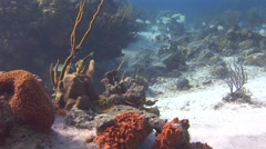 Underwater Bahamas. - stock footage