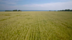 Aerial Overflight of a yellow wheat field Stock Footage