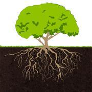 Tree roots sketch - stock illustration