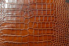 Alligator leather Stock Photos
