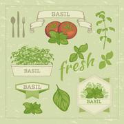 Basil leaves Stock Illustration