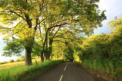 Beautiful old rural road with old oak trees Stock Photos