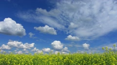 Beautiful flowering rapeseed field under blue sky - timelapse 4k Stock Footage
