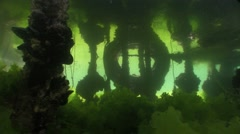 Underwater objects with green algae Stock Footage