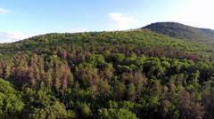 Balkan mixed forest, aerial view Stock Footage
