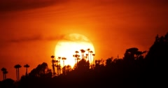 Sunset sun setting behind palm trees. Hollywood Hills, Los Angeles, California, Stock Footage